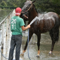 Tierra de caballos... Cuidadores y/o Petiseros...