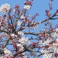 Ecos de primavera…, aquí en el sur...