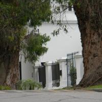 Gigantes del pasado, eucaliptos centenarios…