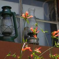 Farolas y flores...