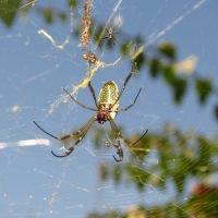 Una araña en el bosque...