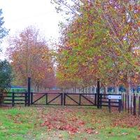 Carretera de otoño...