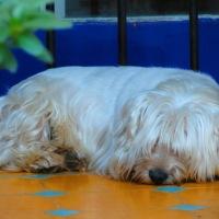 Pequeñín…, un perro guardián...