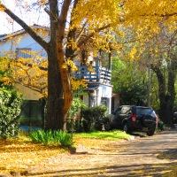 Un árbol de hojas doradas...