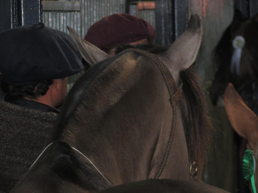 Entre gauchos, sombreros y caballos... (3/6)