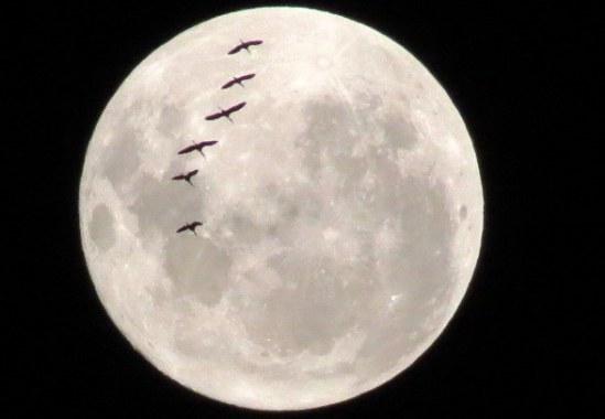 Rencontre amoureuse nouvelle lune