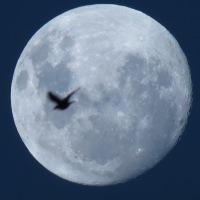 Entre la luna y la tierra, en una noche en el hemisferio sur...