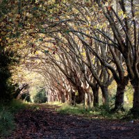 El camino de los árboles…