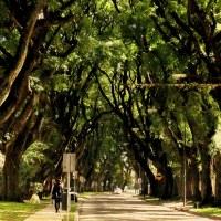La calle de los árboles...
