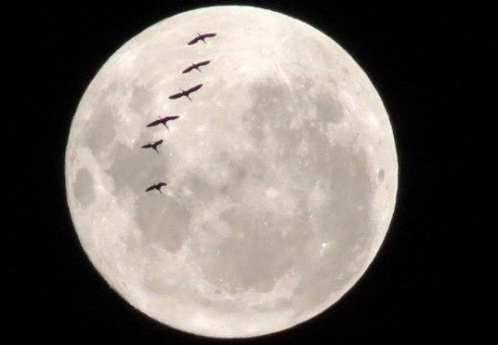 luna-de-febrero-010 (1)