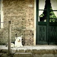 Vibraciones del pasado y un perro...