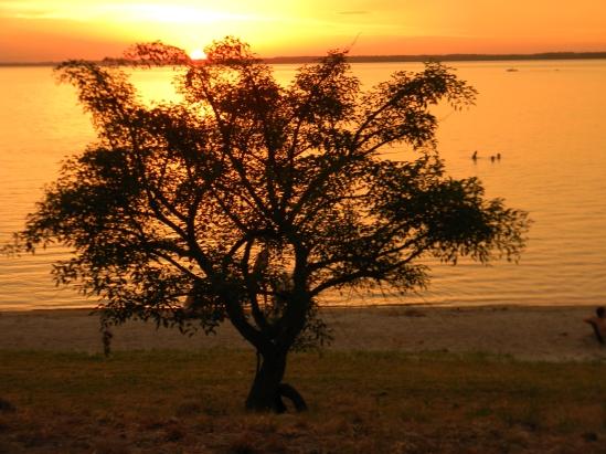 Fuerte como un árbol con los pies sobre la tierra y el alma libre moviéndose con el viento.