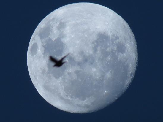 Luna de marzo13 006